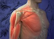 Mayo Clinic Course on Shoulder Tendon Transfer and Complex Rotator Cuff Repai